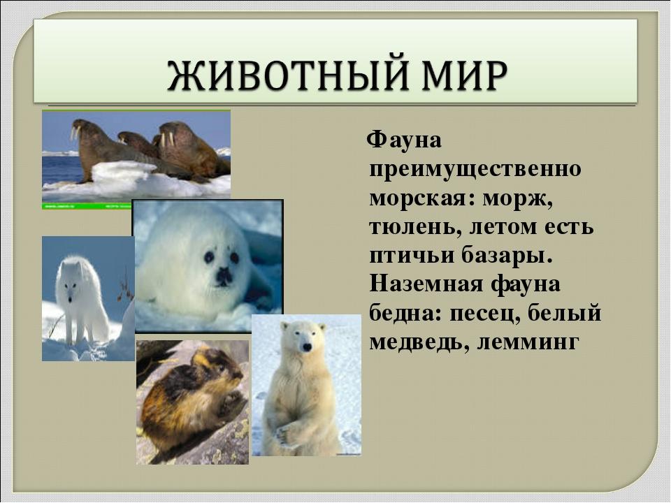 Фауна преимущественно морская: морж, тюлень, летом есть птичьи базары. Назем...