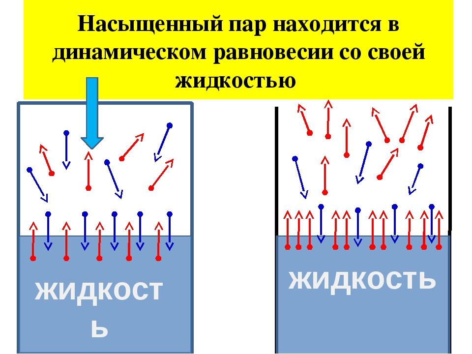 Насыщенный пар находится в динамическом равновесии со своей жидкостью жидкост...
