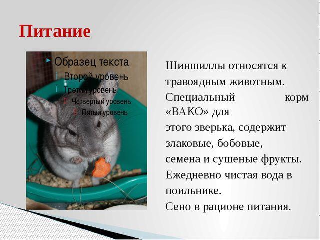 Шиншиллы относятся к травоядным животным. Специальный корм «ВАКО» для этого з...