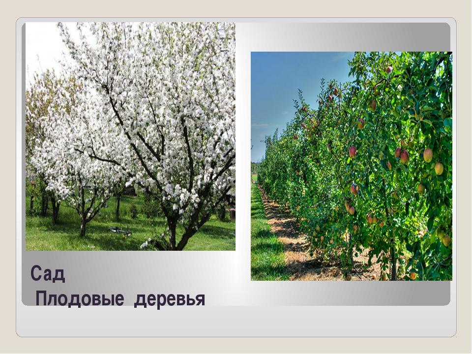 Сад Плодовые деревья