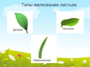 Типы жилкования листьев *