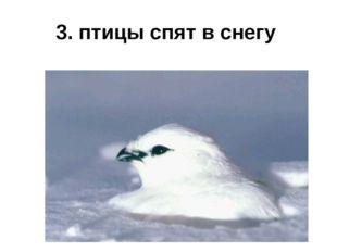 3. птицы спят в снегу