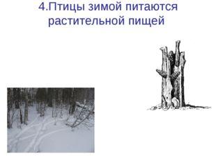 4.Птицы зимой питаются растительной пищей