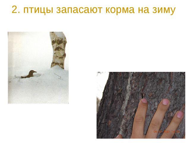 2. птицы запасают корма на зиму