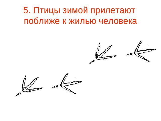 5. Птицы зимой прилетают поближе к жилью человека