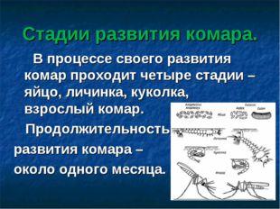 Стадии развития комара. В процессе своего развития комар проходит четыре стад
