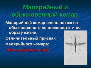 Малярийный и обыкновенный комар. Малярийный комар очень похож на обыкновенног