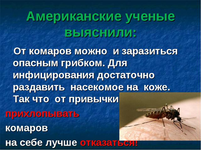 Американские ученые выяснили: От комаров можно и заразиться опасным грибком....