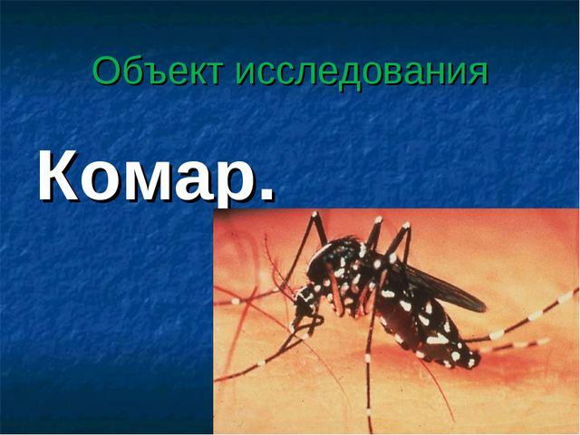 Объект исследования Комар.