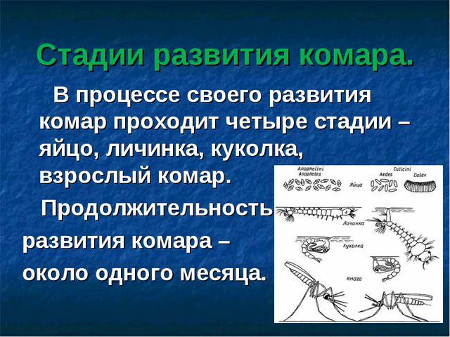 Стадии развития комара. В процессе своего развития комар проходит четыре стад...