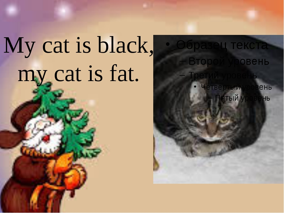 My cat is black, my cat is fat.