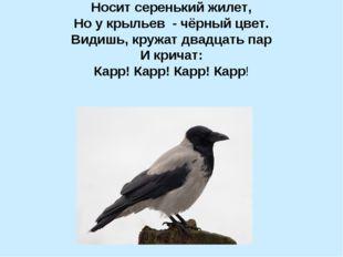 Носит серенький жилет, Но у крыльев - чёрный цвет. Видишь, кружат двадцать па