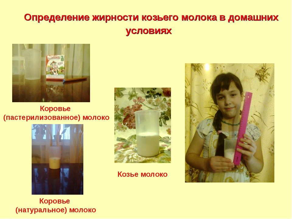 Определение жирности козьего молока в домашних условиях Коровье (пастерилизо...