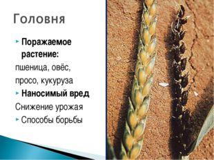 Поражаемое растение: пшеница, овёс, просо, кукуруза Наносимый вред Снижение у