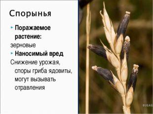 Поражаемое растение: зерновые Наносимый вред Снижение урожая, споры гриба ядо