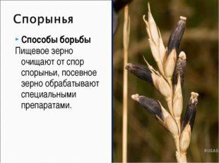 Способы борьбы Пищевое зерно очищают от спор спорыньи, посевное зерно обрабат