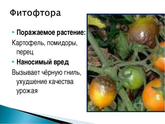 Поражаемое растение: Картофель, помидоры, перец Наносимый вред Вызывает чёрну...