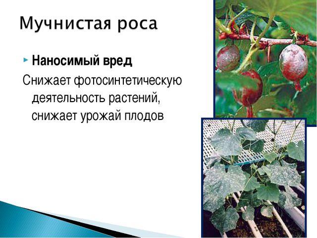 Наносимый вред Снижает фотосинтетическую деятельность растений, снижает урожа...