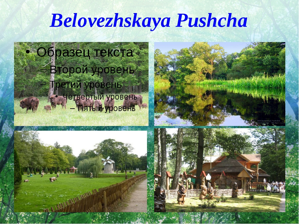Belovezhskaya Pushcha