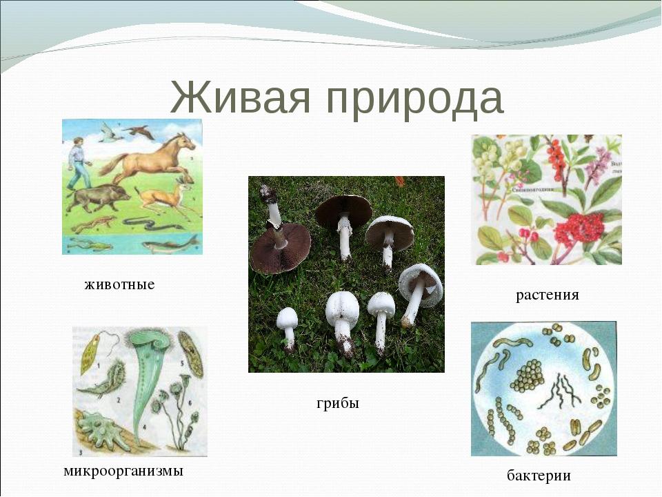 Живая природа животные растения микроорганизмы бактерии грибы