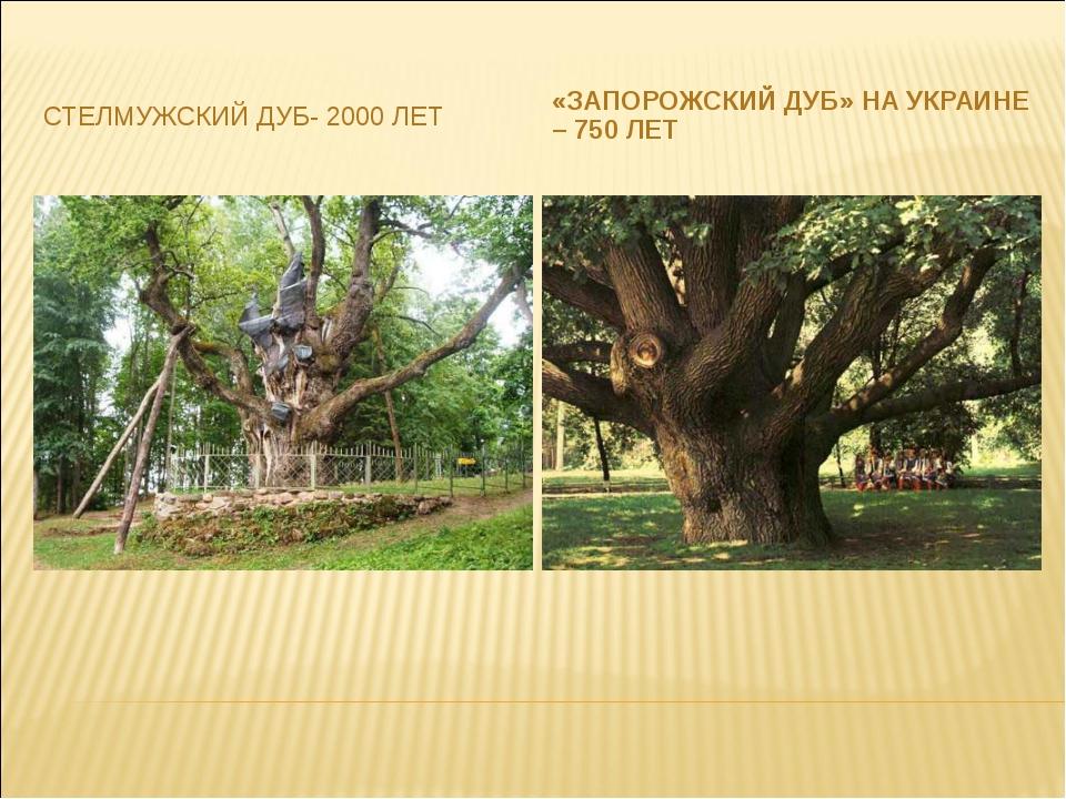 СТЕЛМУЖСКИЙ ДУБ- 2000 ЛЕТ «ЗАПОРОЖСКИЙ ДУБ» НА УКРАИНЕ – 750 ЛЕТ