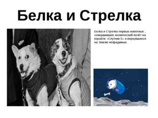 Белка и Стрелка Белка и Стрелка-первые животные , совершившие космический пол