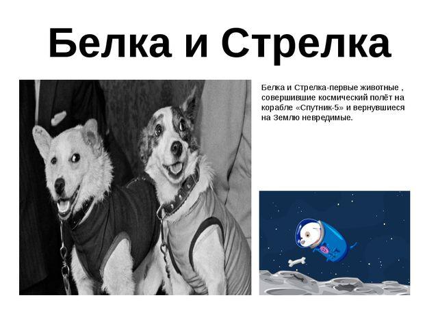 Белка и Стрелка Белка и Стрелка-первые животные , совершившие космический пол...