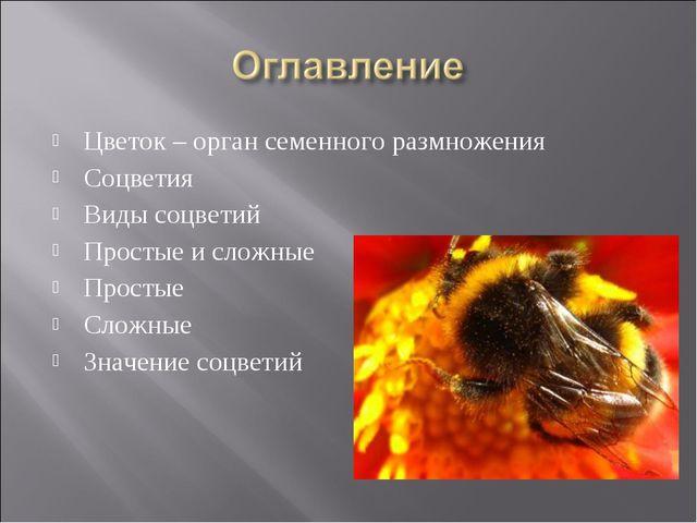 Цветок – орган семенного размножения Соцветия Виды соцветий Простые и сложные...