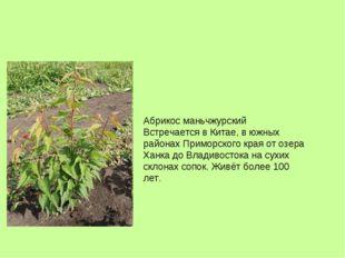Абрикос маньчжурский Встречается в Китае, в южных районах Приморского края от