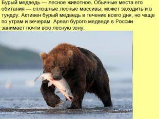 Бурый медведь — лесное животное. Обычные места его обитания — сплошные лесные