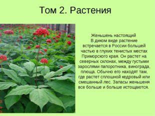 Том 2. Растения Женьшень настоящий В диком виде растение встречается в России
