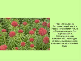 Родиола Комарова Это очень редкий вид и в России встречается только в Приморс