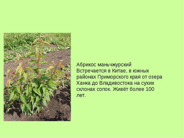 Абрикос маньчжурский Встречается в Китае, в южных районах Приморского края от...