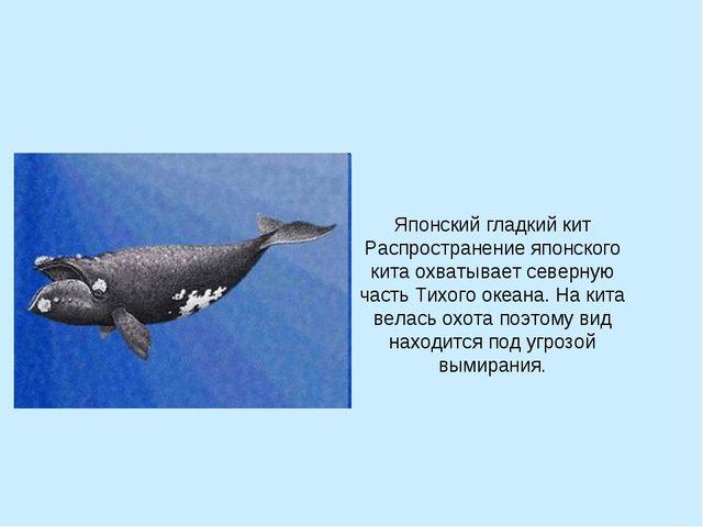 Японский гладкий кит Распространение японского кита охватывает северную часть...