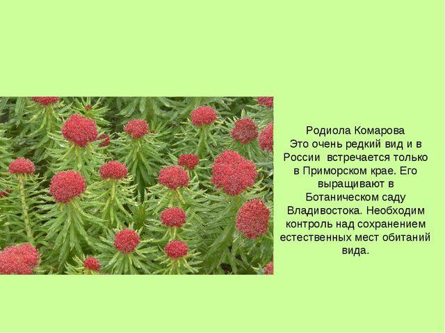 Родиола Комарова Это очень редкий вид и в России встречается только в Приморс...