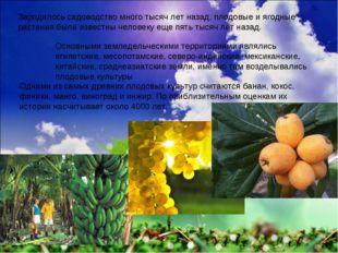 Зародилось садоводство много тысяч лет назад, плодовые и ягодные растения был