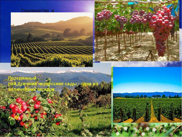 Садоводство в Дагестане Потерянный райДревниечеркесскиесады- одна из вели...