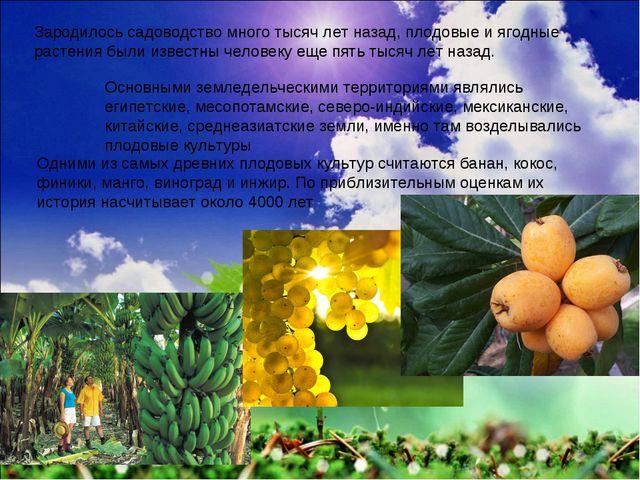 Зародилось садоводство много тысяч лет назад, плодовые и ягодные растения был...