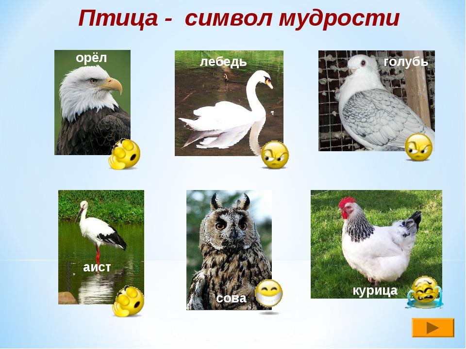 Птица - символ мудрости