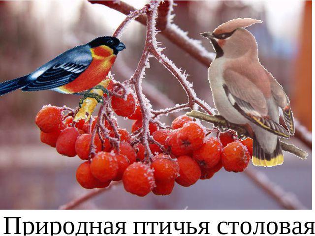 Природная птичья столовая