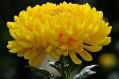 C:\Users\Elena\Desktop\цветы для уст.счета\imgpreviewCA06U3S9.jpg