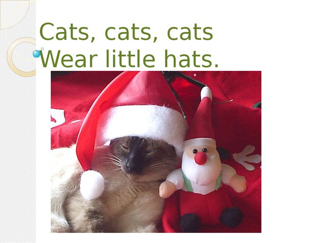 Cats, cats, cats Wear little hats.