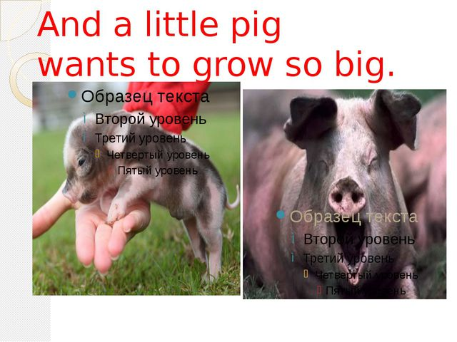 And a little pig wants to grow so big.