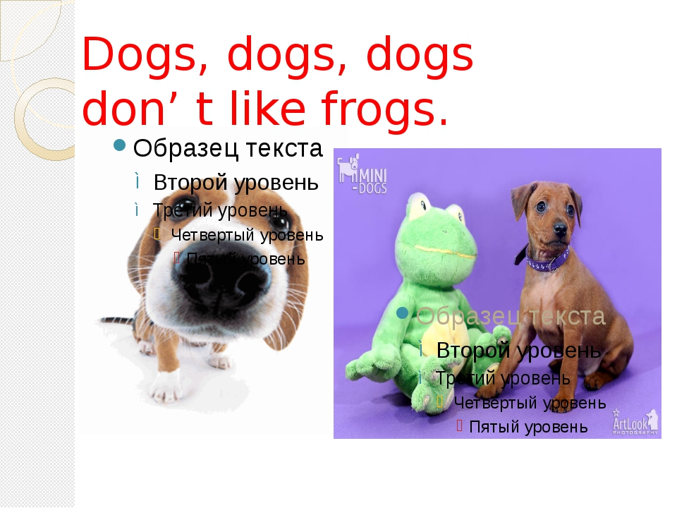 Dogs, dogs, dogs don' t like frogs.