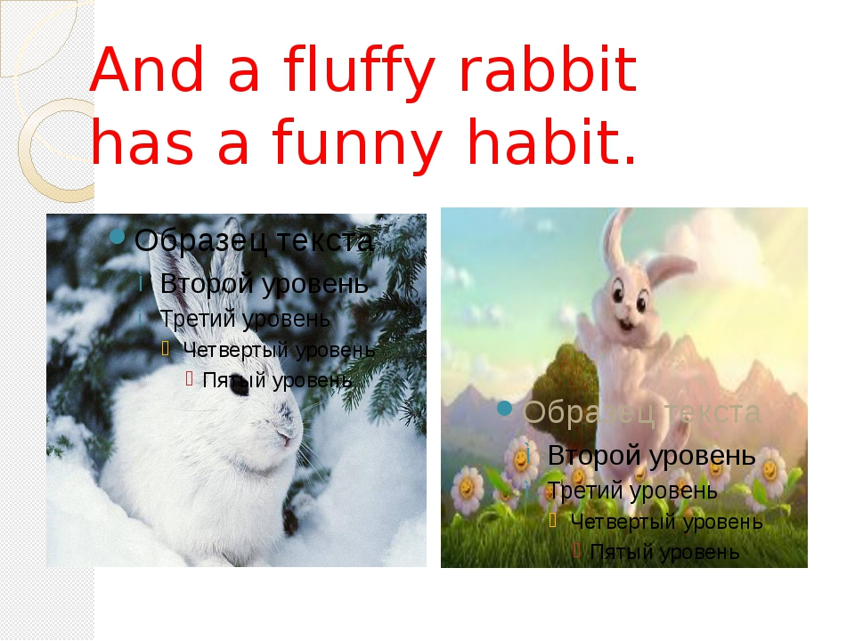 And a fluffy rabbit has a funny habit.