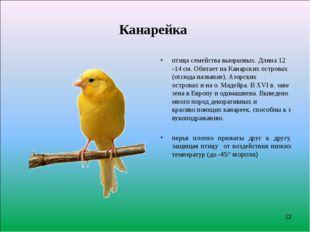 Канарейка птицасемействавьюрковых.Длина12 -14см.ОбитаетнаКанарскихос