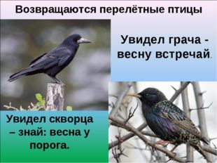 Возвращаются перелётные птицы Увидел грача - весну встречай. Увидел скворца –