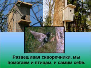 Развешивая скворечники, мы помогаем и птицам, и самим себе.