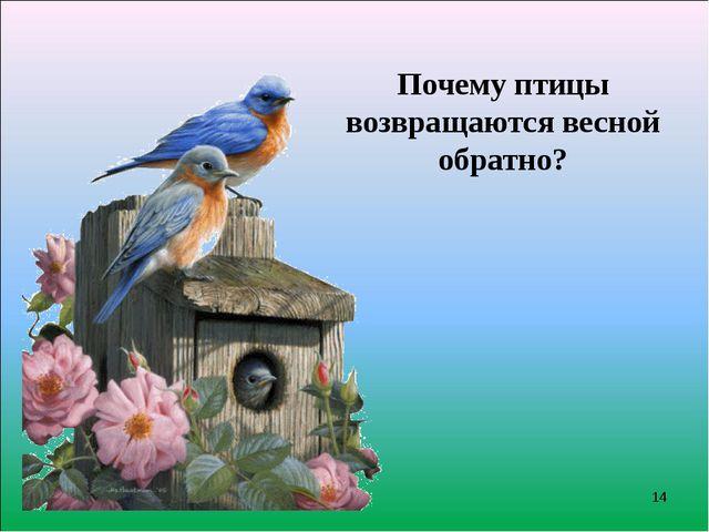 Почему птицы возвращаются весной обратно? *