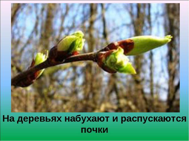 На деревьях набухают и распускаются почки